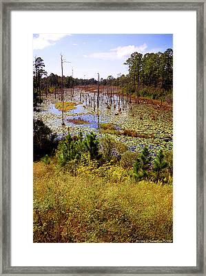 Florida Wetland Framed Print by Nicole I Hamilton