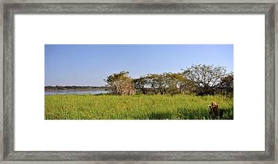 Florida Wetlands Panoramic Framed Print