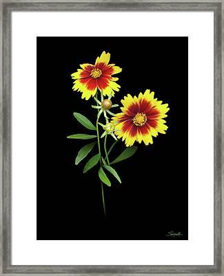 Florida Wildflowers Framed Print