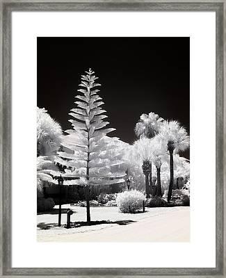 Floridian Flora Framed Print