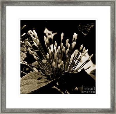 Florita Framed Print by Son Of the Moon