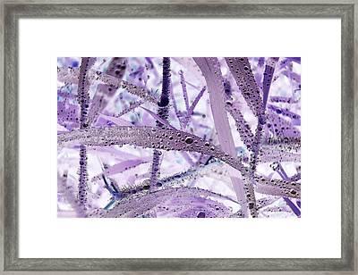 Flounder Framed Print