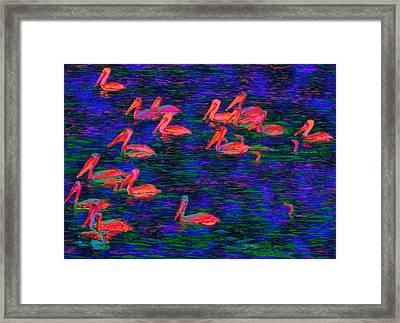 Flourescent Pelicans Framed Print