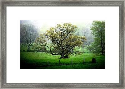 Flourish Where You Grow Framed Print by Angela Davies
