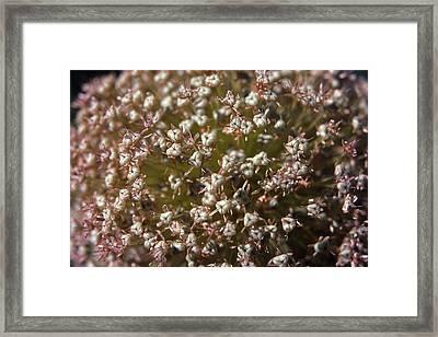 Flower - 1 Framed Print by Randy Muir
