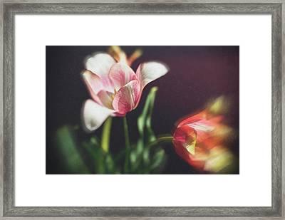 Flower-1 Framed Print by Okan YILMAZ