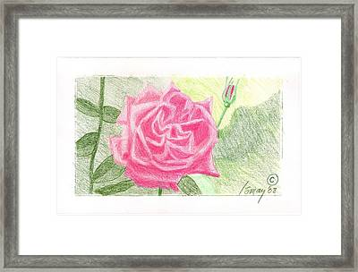 Flower 2 - The Confused Rose Framed Print by Rod Ismay