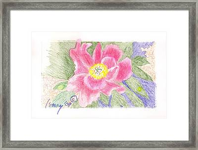 Flower 3 - Pink Single Peone Framed Print by Rod Ismay