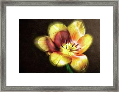 Flower-4 Framed Print by Okan YILMAZ