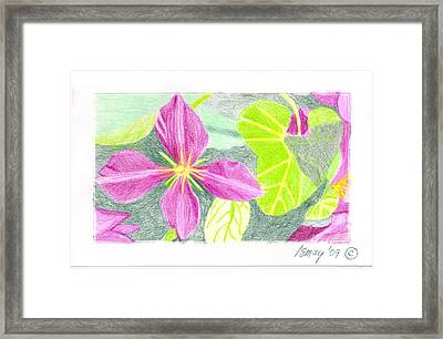 Flower 5 - Purple Clematis Framed Print by Rod Ismay