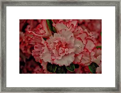 Flower 5 Framed Print