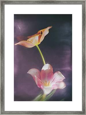 Flower-5 Framed Print by Okan YILMAZ