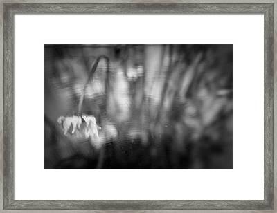Flower #7421 Framed Print