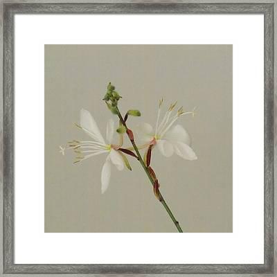 Flower 8-12 Framed Print by Skip Willits