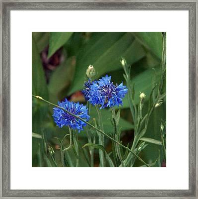 Flower 8-14 Framed Print by Skip Willits