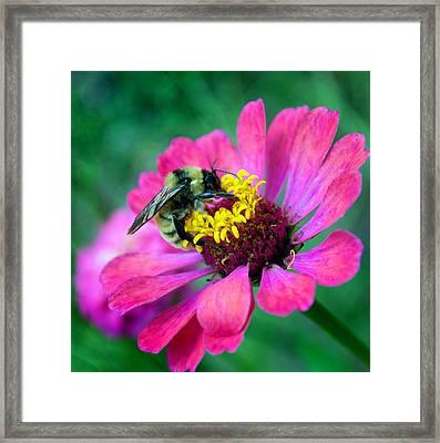 Flower 8-9 Framed Print by Skip Willits