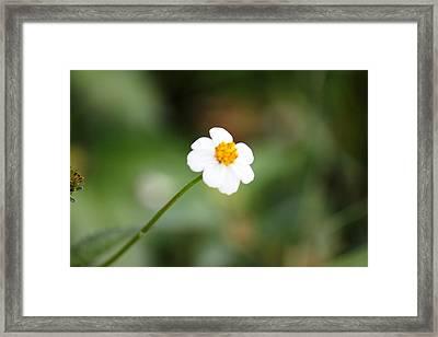 Flower Alonliness  Framed Print