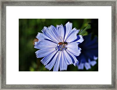 Flower And Bee 2 Framed Print