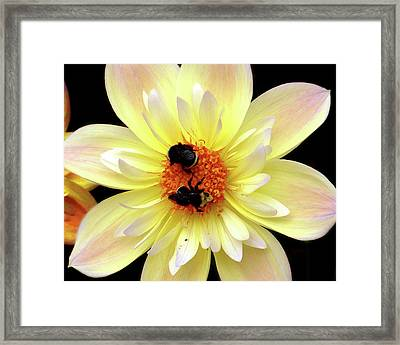 Flower And Bees Framed Print