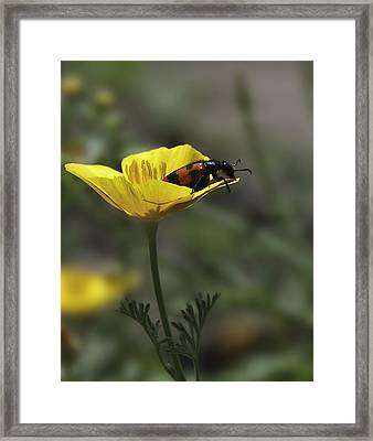 Flower And Bug Framed Print by Svetlana Sewell
