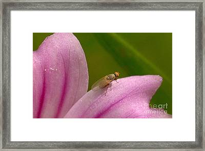 Flower And Fly Framed Print by Marc Bittan