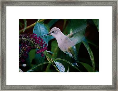 Flower And Hummingbird Framed Print