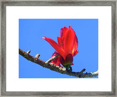 Flower And Sky Worship Framed Print by Tina M Wenger