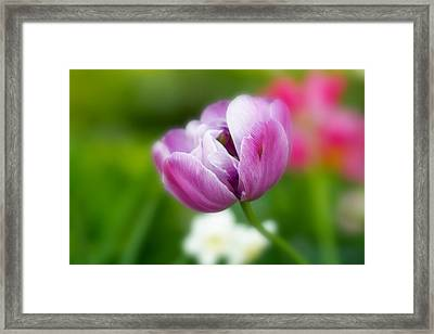 Framed Print featuring the photograph Flower by Anthony Rego