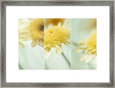 Flower Arrangement - Marguerite Daisies Framed Print