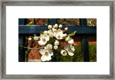 Flower Art Framed Print by Britten Adams