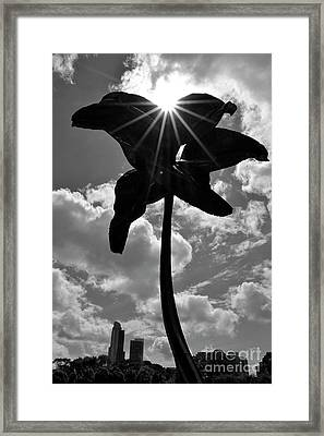 Framed Print featuring the photograph Flower Art by Zawhaus Photography