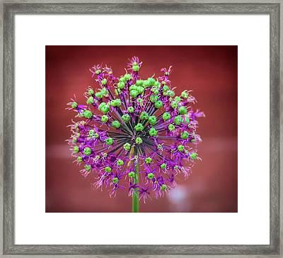 Flower Ball Framed Print by Martin Newman