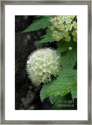 Framed Print featuring the photograph Flower Ball by Rod Wiens