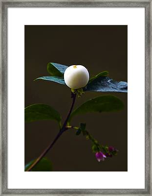 Flower Ball Framed Print by Svetlana Sewell