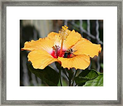 Flower Bee Framed Print