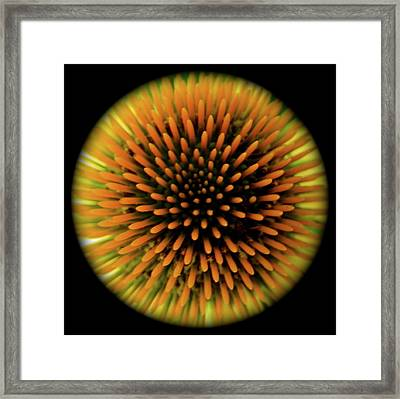Flower Burst Framed Print by Tina Valvano