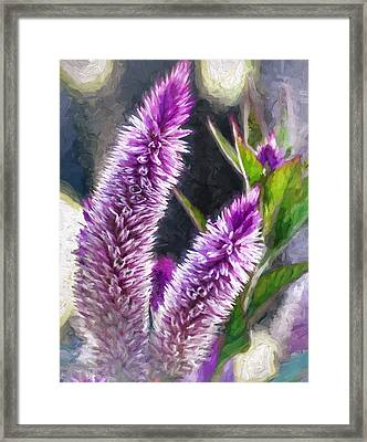 Flower - Purple Celosia - Purple Plumes Framed Print by Black Brook Photography