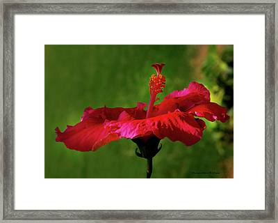 Flower Framed Print by Chaza Abou El Khair