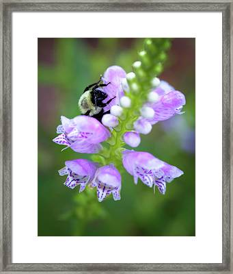 Framed Print featuring the photograph Flower Climbing by Eduard Moldoveanu