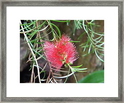Framed Print featuring the photograph Flower Close-up by Manuela Constantin