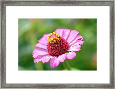 Flower Close-up Framed Print
