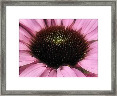Flower Closeup Framed Print