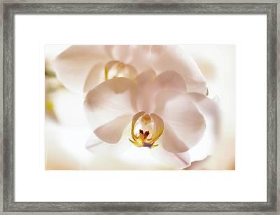 Flowers Delight- Framed Print