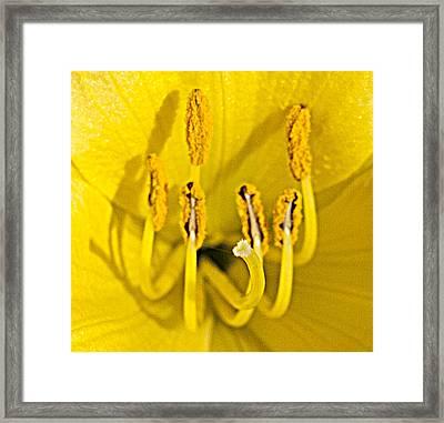 Flower Detail Framed Print