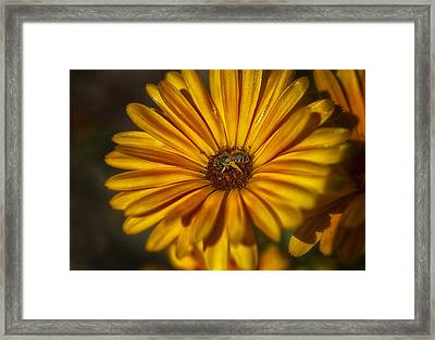The Flower Inspector Framed Print