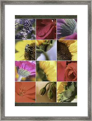Flower Dozen Framed Print