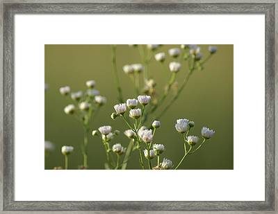 Flower Drops Framed Print