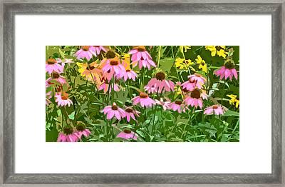 Echinacea Flower Garden Framed Print by Linda Mears