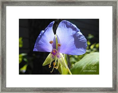 Flower Face Framed Print by Felipe Adan Lerma
