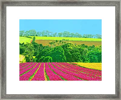Flower Farm And Hills Framed Print by Dominic Piperata